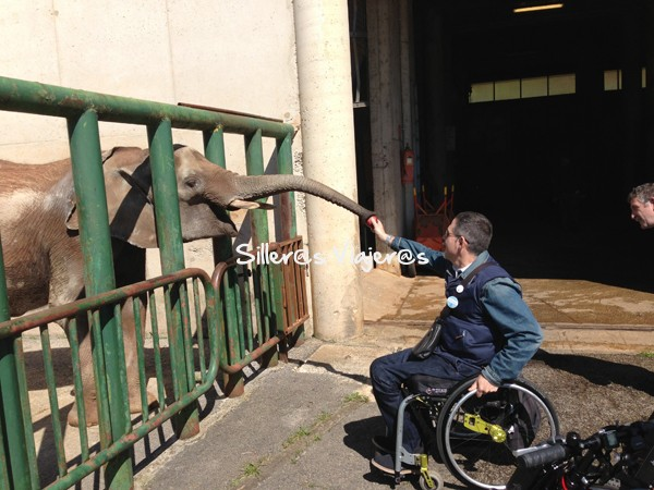 Dando de comer a elefantes