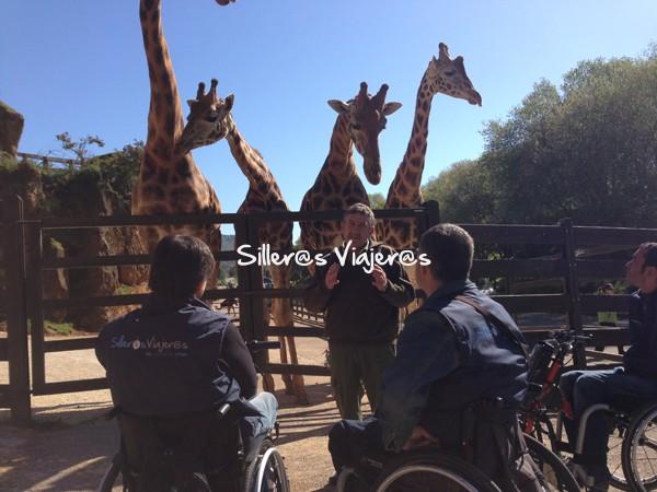 Jirafas  Parque de la Naturaleza de Cabárceno
