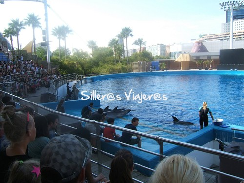 Espectáculo en el delfinario