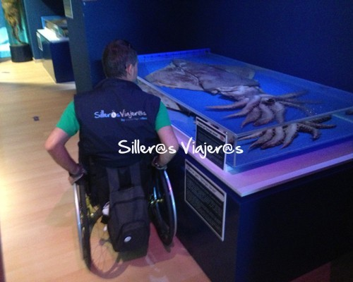 Calamar gigante a vista de silla de ruedas