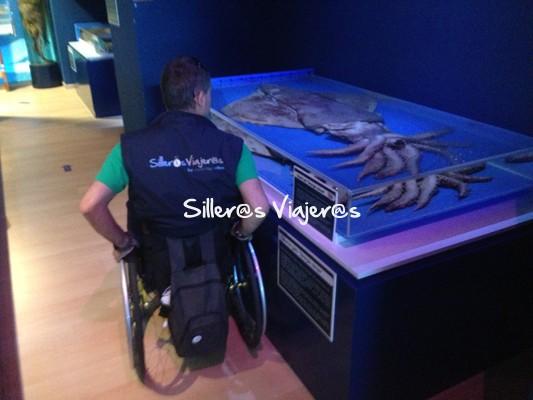 Exposición dentro del Centro de Interpretación del Calamar Gigante