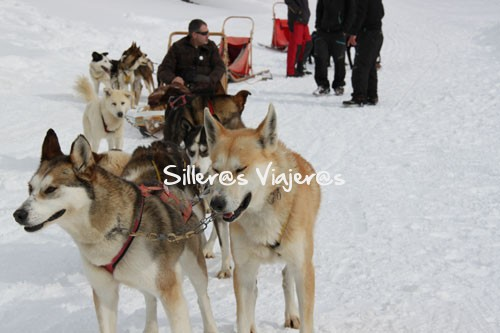 Paseo en trineo de nieve tirado por perros