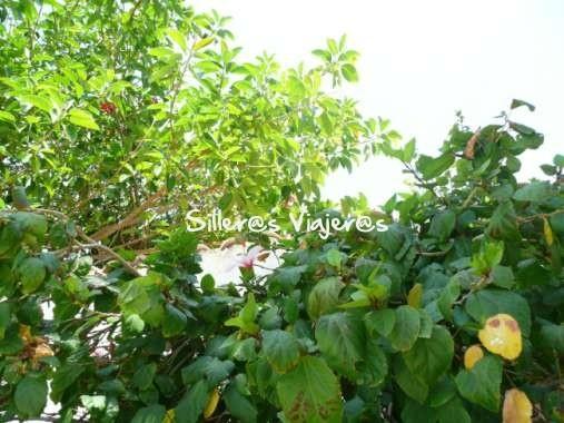 jardines cortijo de la paloma