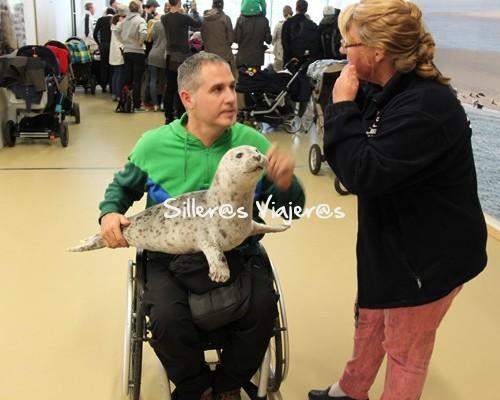 visitando la clinica de recuperación de focas