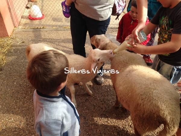 Niños dan de comer a los animales que hay en el Vilar rural.