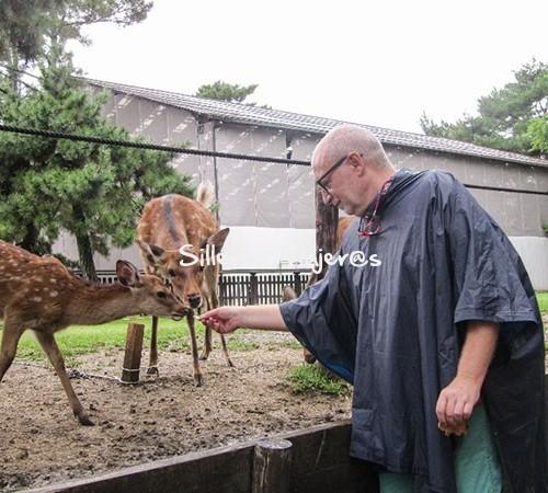 Alimentando a los ciervo de Nara