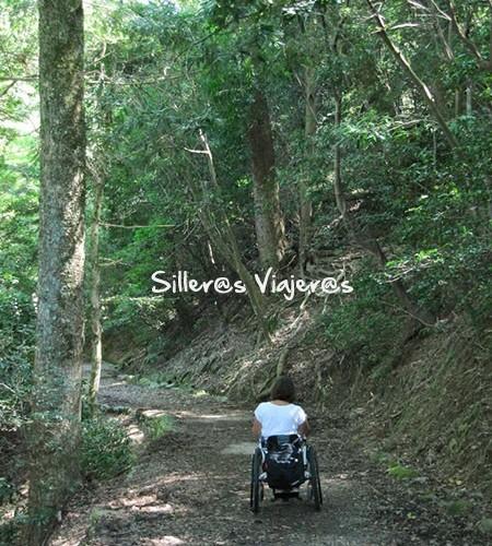 Paseo accesible por el bosque de Takayama