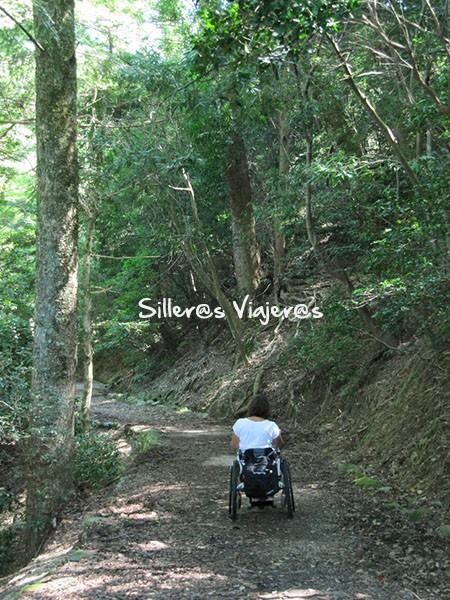Paseos por el bosque en la zona norte de la ciudad.