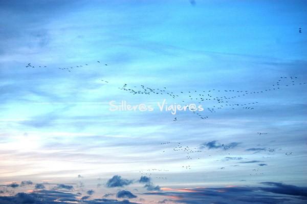 Grullas en vuelo al amanecer