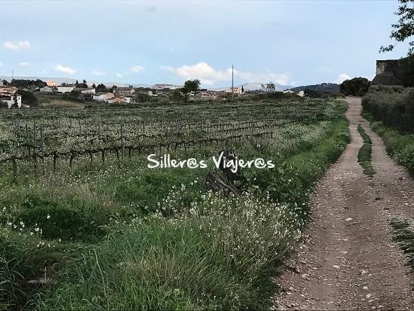 Caminos aldedor de las viñas