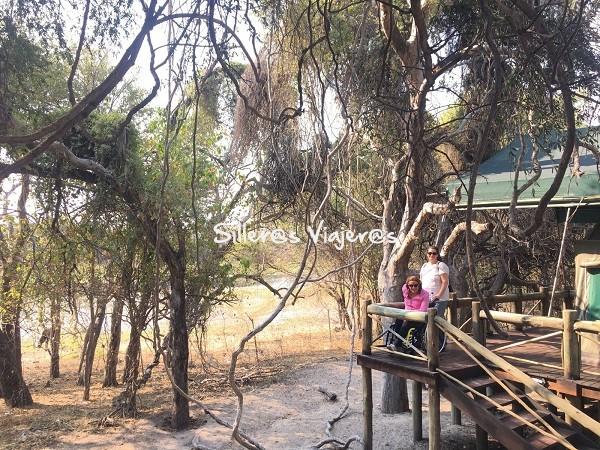 Tiendas de madera en árboles
