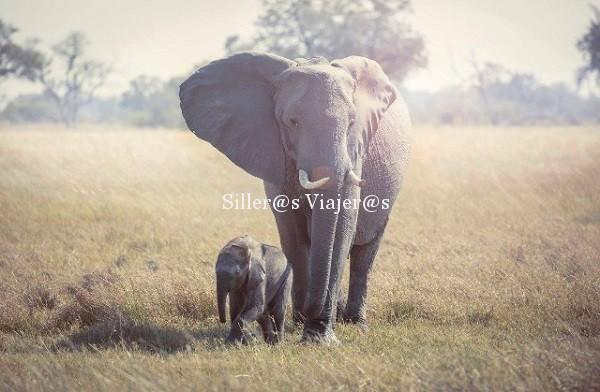 Elefantes paseando por la sabana
