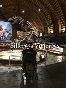 Reproducciones a tamaño real de dinosaurios