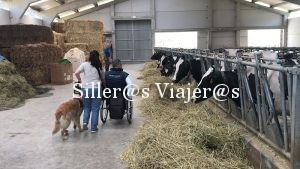Visitando a las vacas