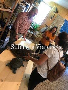 Persona ciega con fósil de tortuta marina
