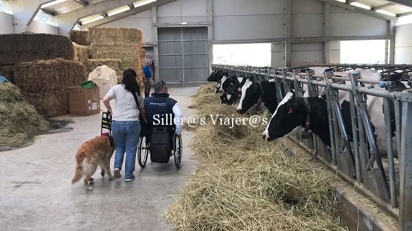 Visita a la vaqueriza de la quesería Vega de Tordín