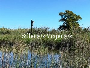Carrizales, cañas y juncos, vegetación predominante. ©MJ:Aguilar