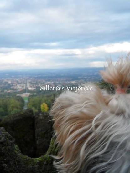 La perrita de Belén disfrutando de las vistas de Kassel