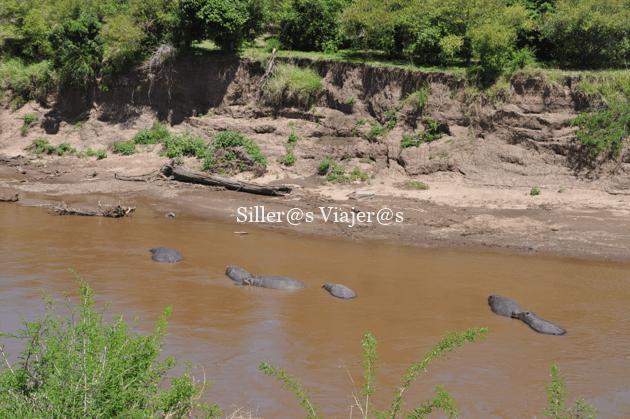 Cocodrilos en el río Mara