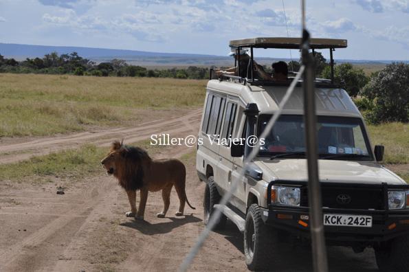 León junto a uno de los vehículos del safari