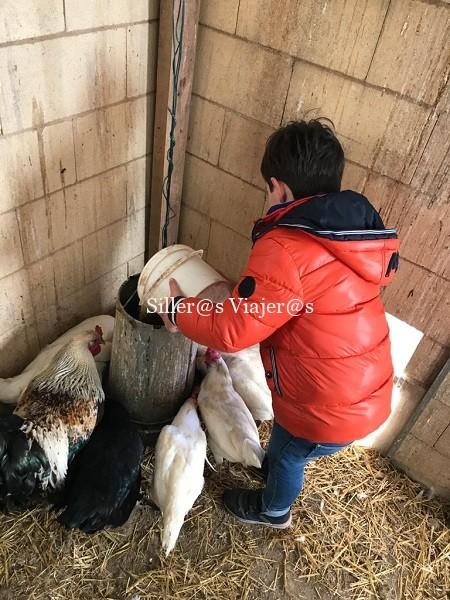 Alimentando a las gallinas