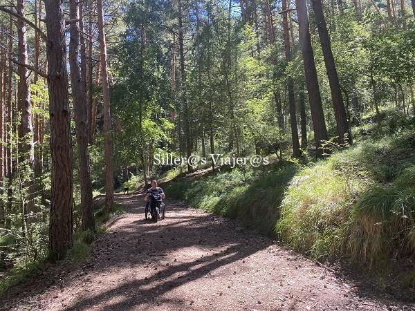 Rodando por el bosque