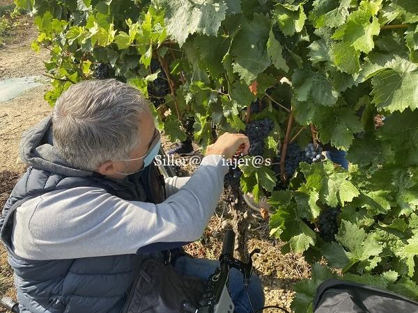Kity corta la uva desde su silla de ruedas