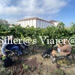 Llenando el cubo de uva