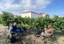 2 personas en silla de ruedas llenan un cubo de uva para elaborar mosto